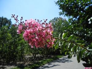 botantical gardens brooklyn new york
