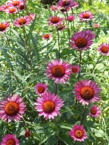 botanical garden brooklyn new york