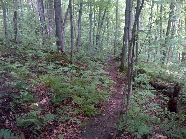 hogg's falls ontario bruce trail hike hiking